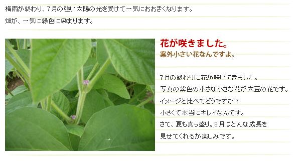 大豆の花ってこんな感じ